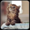 黛西猫主题(女生萌宠桌面锁屏壁纸)