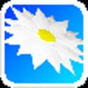 虚拟宠物:折纸菊花