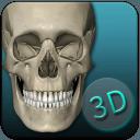 骨骼解剖图集