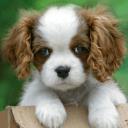 可爱的小狗动态壁纸。