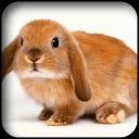 可爱的兔子壁纸