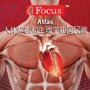 人体解剖生理学初级动画