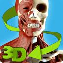 轻松人体解剖