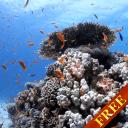 海鱼视频动态壁纸