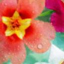 花卉精美系列锁屏