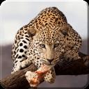 Wild Animal Live Wallpaper PRO