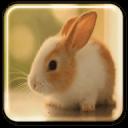 兔子动态壁纸
