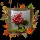 秋天的照片拼贴