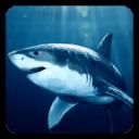 鲨鱼动态壁纸