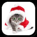 猫咪过圣诞