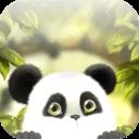 可爱熊猫动态壁纸
