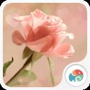 粉色玫瑰-夢象動態壁紙