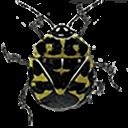 勇敢的甲虫