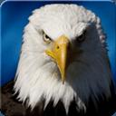 终极鹰模拟器3d