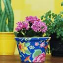 简单的花盆设计