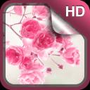 粉红色的花朵 动态壁纸 - 粉红色花朵 现场壁纸