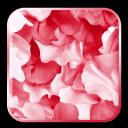 玫瑰花瓣高清壁纸