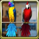 說話的鸚鵡情侶免費