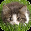3D流浪猫模拟