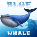 Blue Whale Simulator Mind Game