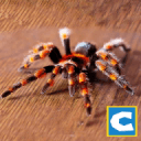终极蜘蛛模拟器