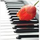 新极品钢琴