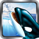 虎鲸的3D模拟器