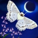蝴蝶之星夜