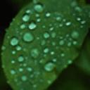 纯净雨滴动态壁纸