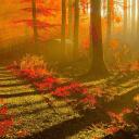 LWP 秋天的树林