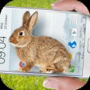兔子在手机可爱的笑话