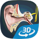 The mechanism of hearing VR 3D