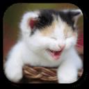 搞笑猫咪动态壁纸