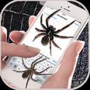 蜘蛛 搞笑 动态 图片 手机 屏幕上: 背景 动画 笑话