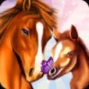 马儿天堂—我的梦想牧场