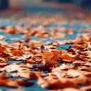 GO主題—落葉