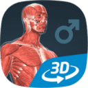 Human body (male) VR 3D