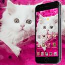 粉红波斯猫家宠物可爱女性的猫手机主题