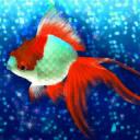 Goldfish Friends