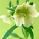 潘多拉之鲜花主题