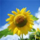 玩转桌面-向日葵