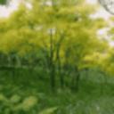 魔幻桌面-森林