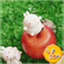 YOO主题-可爱玩偶molang兔
