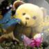 泰迪熊壁纸 個人化 App LOGO-硬是要APP