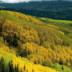 世界最美森林动态壁纸 個人化 App LOGO-APP試玩