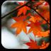 秋天的歌-九天音乐 媒體與影片 App Store-愛順發玩APP
