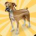 狗的记忆游戏 益智 App Store-癮科技App