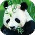 儿童识动物(一) LOGO-APP點子
