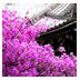 樱花烂漫第二辑主题壁纸 個人化 LOGO-玩APPs
