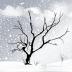 孤独的树动态壁纸 LOGO-APP點子
